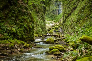 River flowing over moss colored rocks in a lush green canyon